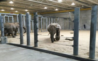 Milwaukee County Zoo African Elephant Exhibit – Milwaukee, WI